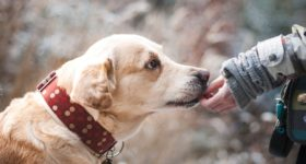Liability Insurance for Dog Bite Claims Opelousas, LA